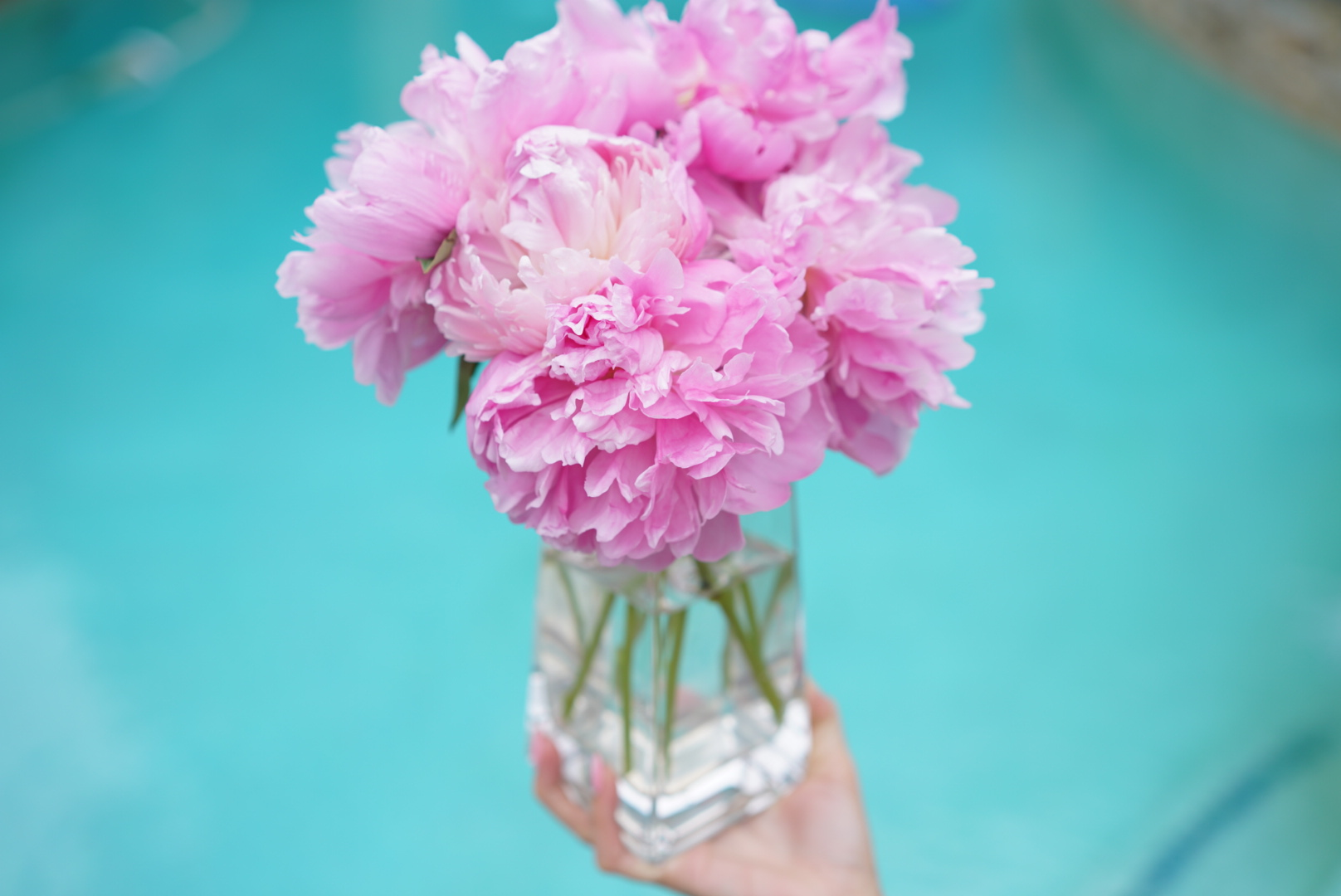 Pink Peonies Angela Lanter Hello Gorgeous