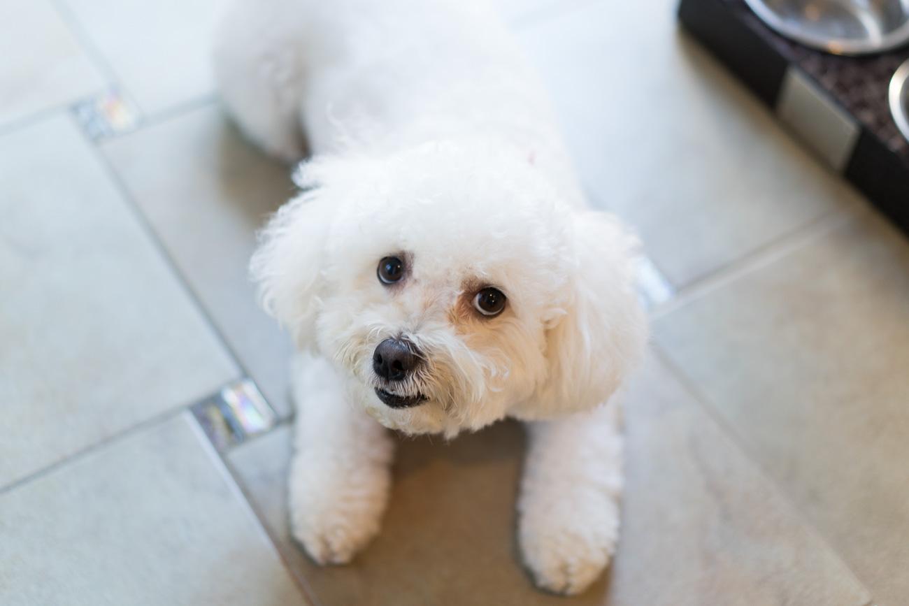 Stella & Chewy's Meal Mixers dog food review angela lanter hello gorgeous Ahsoka maltipoo