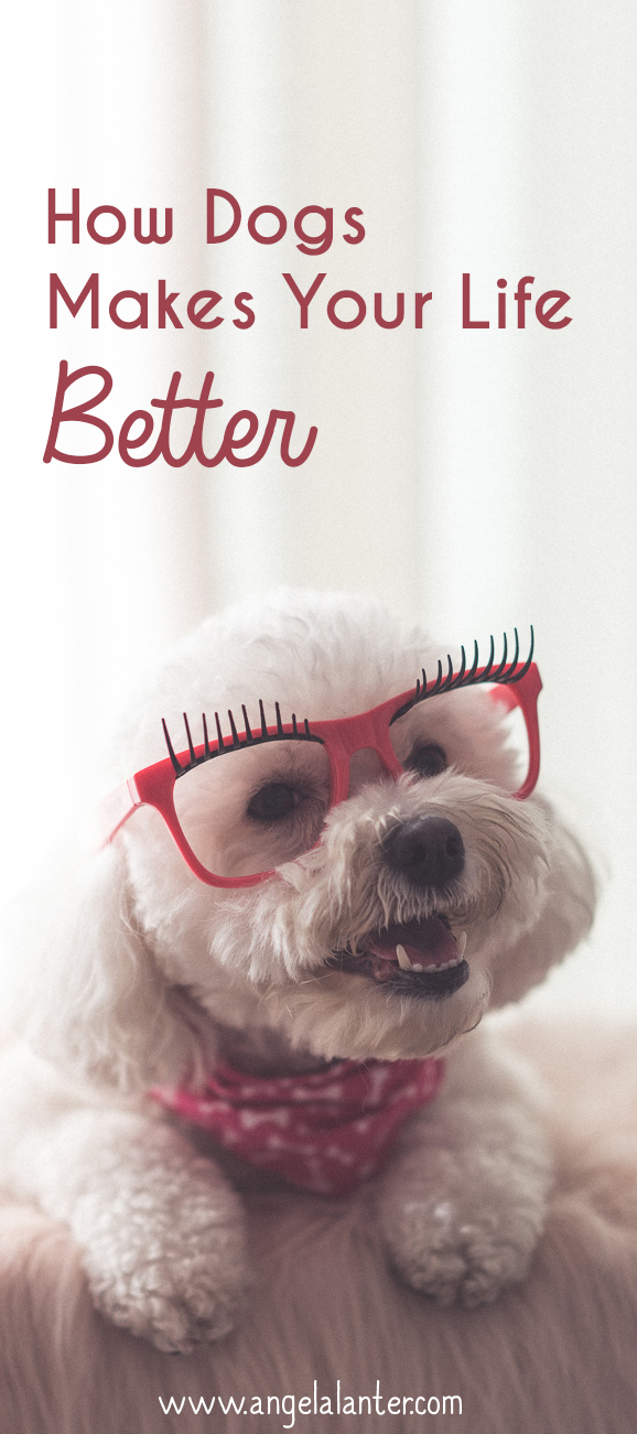 How Dogs makes your life better. I love my dog.